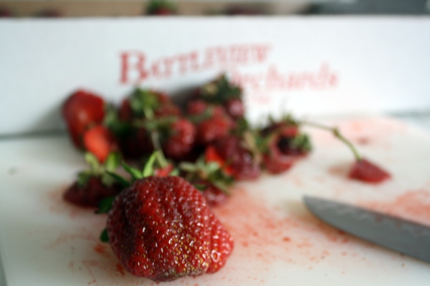 Strawberries picked at Battleview Orchards